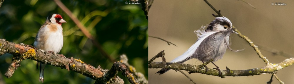 tier-natur-foto.ch